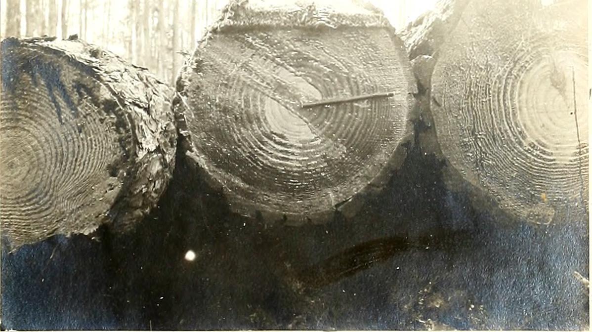 The Little Lumberjack story art