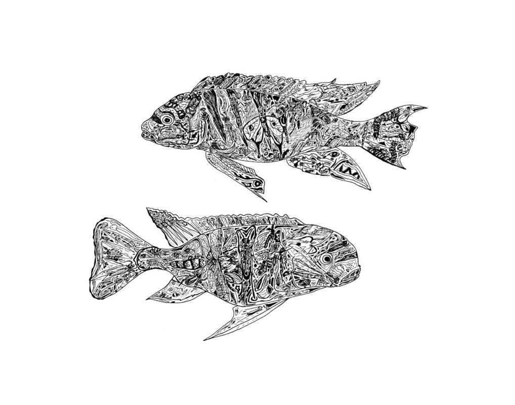 Two Fish by Anthony Scutro